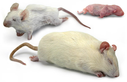 Frozen Rats and Mice